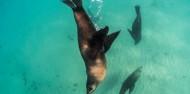 Dolphin & Seal Swim - Polperro image 5