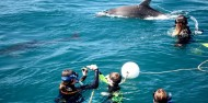 Dolphin & Seal Swim - Polperro image 4