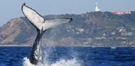 Whale Watching Tour in Cape Byron Marine Reserve - Byron Bay Dive Centre image 2