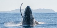 Whale Watching Tour in Cape Byron Marine Reserve - Byron Bay Dive Centre image 3