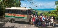 Daintree Rainforest & Cape Tribulation Tour image 7