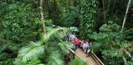 Reef & Cape Tribulation Rainforest Combo image 3