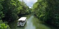 Daintree Rainforest & Cape Tribulation Tour image 5