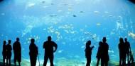Cairns Aquarium image 4