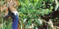 Cape Tribulation & Daintree Rainforest Tour image 6