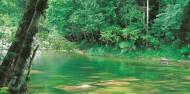 Cape Tribulation & Daintree Rainforest Tour image 5
