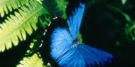 Cape Tribulation & Daintree Rainforest Tour image 7