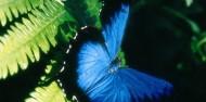 Cape Tribulation & Daintree Rainforest Tour image 7