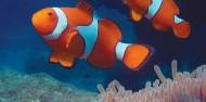 Whitsundays Diving - 3 days & 2 nights - Kiana image 5