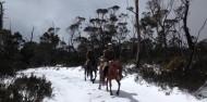 Horse Riding - Cradle Mountain image 9