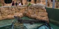 Crocosaurus Cove Big Croc Feed Experience image 6