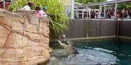 Crocosaurus Cove Big Croc Feed Experience image 2