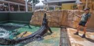 Crocosaurus Cove Big Croc Feed Experience image 1