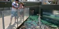 Crocosaurus Cove Big Croc Feed Experience image 7