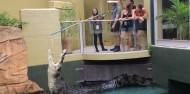 Crocosaurus Cove Big Croc Feed Experience image 4