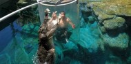 Crocosaurus Cove Cage of Death image 7