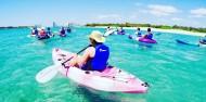 Kayaking - Dolphin & Stradbroke Island Tour image 1