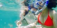 Kayaking - Dolphin & Stradbroke Island Tour image 5