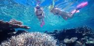 Reef & Cape Tribulation Rainforest Combo image 2