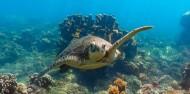 Frankland Islands - Frankland Islands Reef Cruises image 2