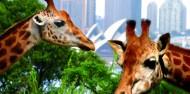 Taronga Zoo Guided Tour - Wild Australia Experience image 6