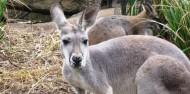 Taronga Zoo image 4