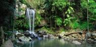 Hinterland Half Day Tour - Rainforest & Wildlife Tour image 2