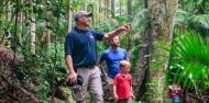 Hinterland Half Day Tour - Rainforest & Wildlife Tour image 1