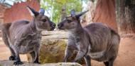 Wild Life Sydney Zoo image 2