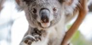 Wild Life Sydney Zoo image 1