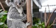 Wild Life Sydney Zoo image 5