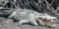 Jet Ski Crocodile Spotting Tour image 3