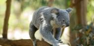 Lone Pine Koala Sanctuary & River Cruise image 2