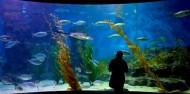 Melbourne Sea Life Aquarium image 3