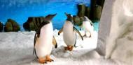 Melbourne Sea Life Aquarium image 1