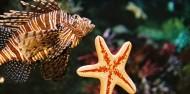 Melbourne Sea Life Aquarium image 9