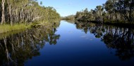 Noosa Everglades - Afternoon River Cruise image 1