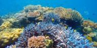 Cape Tribulation 2 Trips Deal - Ocean Safari & Ocean Rafting image 3