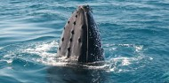 Whale Watching - Ocean Eco Adventures image 3