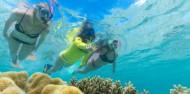 Ocean Safari image 8