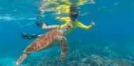 Ocean Safari image 3