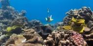 Ocean Safari image 9