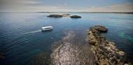 Penguin Island - Dolphins, Penguins & Sea Lion Cruise image 1