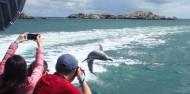 Penguin Island - Dolphins, Penguins & Sea Lion Cruise image 7