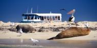 Penguin Island - Dolphins, Penguins & Sea Lion Cruise image 2