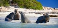 Penguin Island - Dolphins, Penguins & Sea Lion Cruise image 8