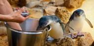 Penguin Island - Dolphins, Penguins & Sea Lion Cruise image 4