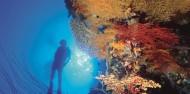 Reef Boat Day Trip - Port Douglas - Poseidon image 6