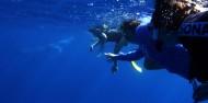 Reef Boat Day Trip - Port Douglas - Poseidon image 7