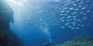 Liveaboard Dive Boat -  Pro Dive image 4
